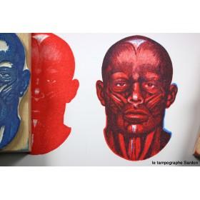 Anatomie de la face - Facial anatomy