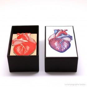 Coeur humain - Human heart